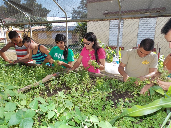Puerto Rico Chapter Harvesting and Planting